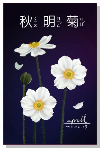 Spril花草系列畫冊-秋明菊