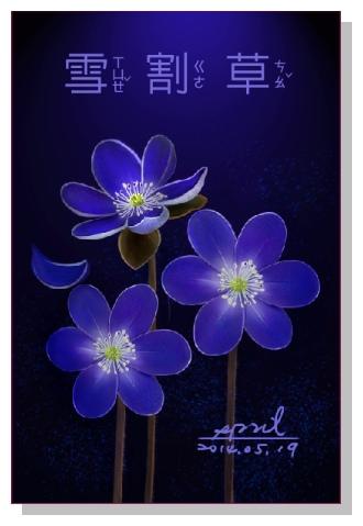 Spril花草系列畫冊-雪割草