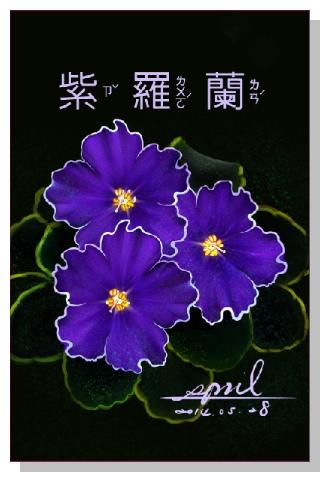 pril的花草系列畫冊-紫羅蘭
