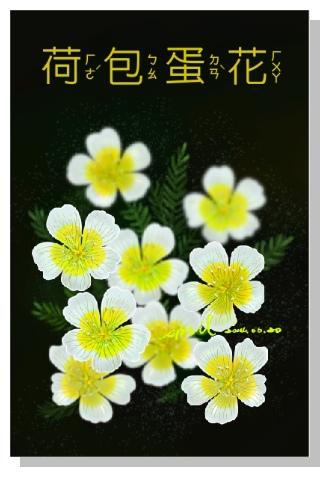 Spril的畫-花草畫冊-荷包蛋花