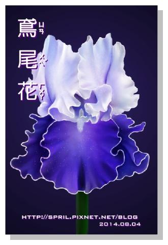 Spril的畫-花草系列-鳶尾花