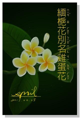 SPRIL-花草系列畫冊-緬梔花