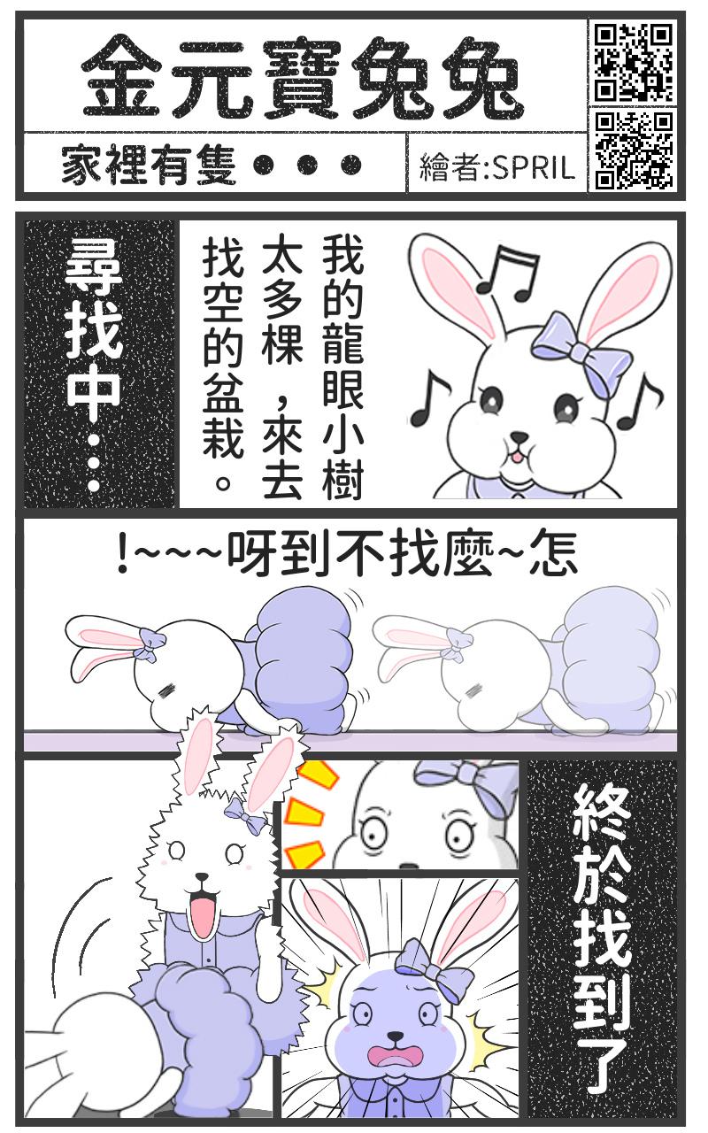 金元寶兔兔-家裡有一隻...