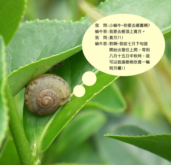 春曦農場-蝸牛獨白