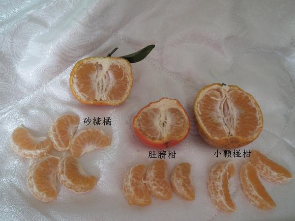 春曦農場-砂糖橘7