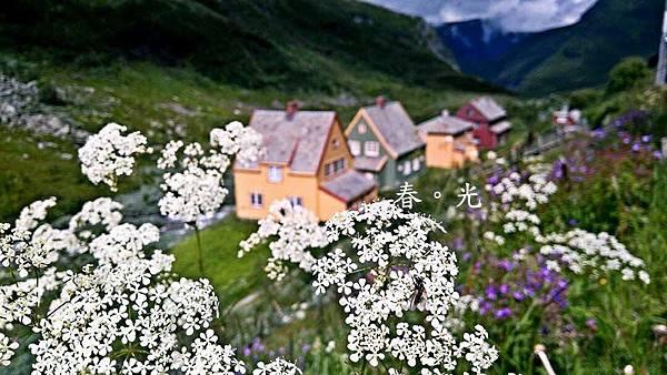 挪威flam4.jpg