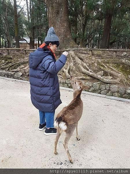 【遊記】 關西自助去!Day2 奈良懶懶鹿(╯✧∇✧)╯