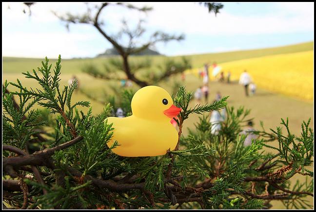 擁恆黃色小鴨_150.jpg