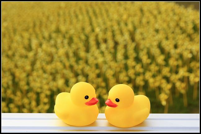 擁恆黃色小鴨_170.jpg