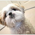Dog_39.jpg