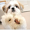 Dog_42.jpg