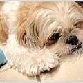 Dog_30.jpg
