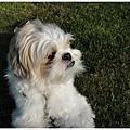 Dog_23.jpg
