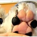 Dog_31.jpg