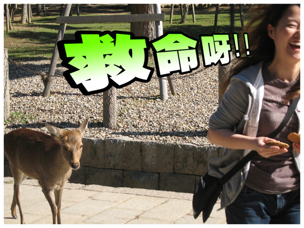 Todaiji_06.jpg