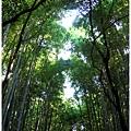 Bamboo_02.jpg
