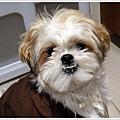 Dog_06.jpg