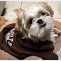 Dog_07.jpg