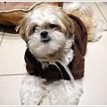 Dog_08.jpg