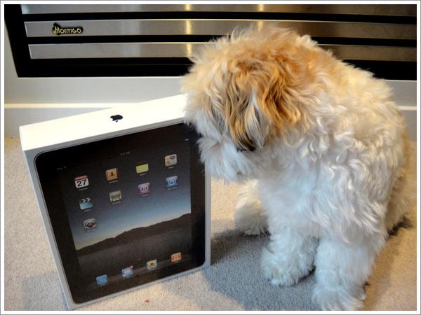 iPad_05.jpg