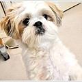 Dog_40.jpg