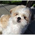 Dog_27.jpg