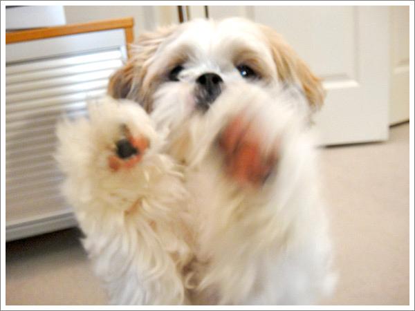 Dog_43.jpg