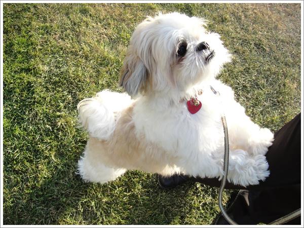 Dog_20.jpg