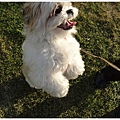 Dog_21.jpg
