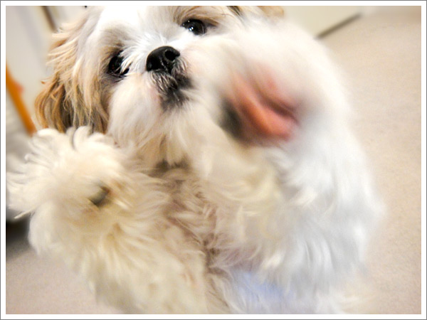 Dog_37.jpg