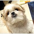 Dog_15.jpg