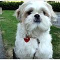 Dog_24.jpg