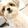 Dog_45.jpg
