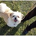 Dog_19.jpg