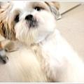 Dog_38.jpg