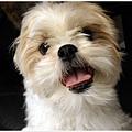 Dog_11.jpg