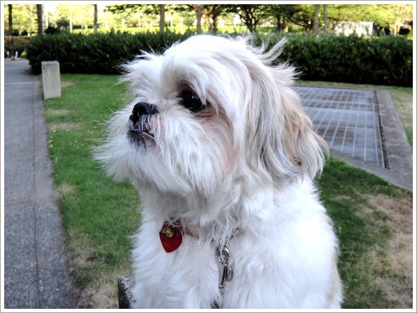 Dog_26.jpg
