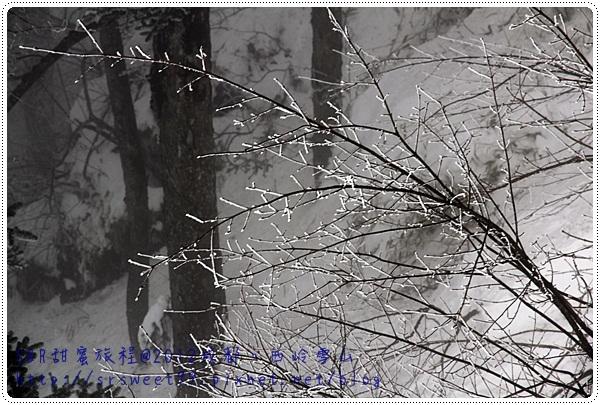 西岭雪山玩雪 474.JPG