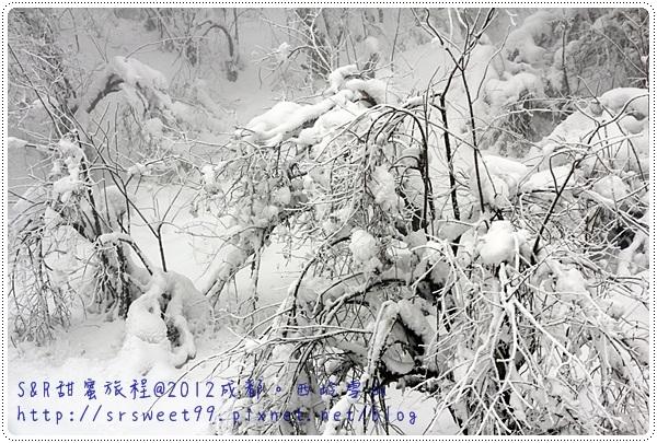 西岭雪山玩雪 476.JPG