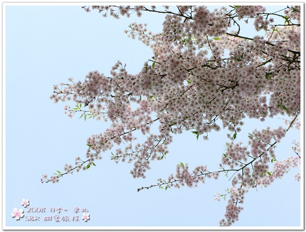 IMG_1528.jpg