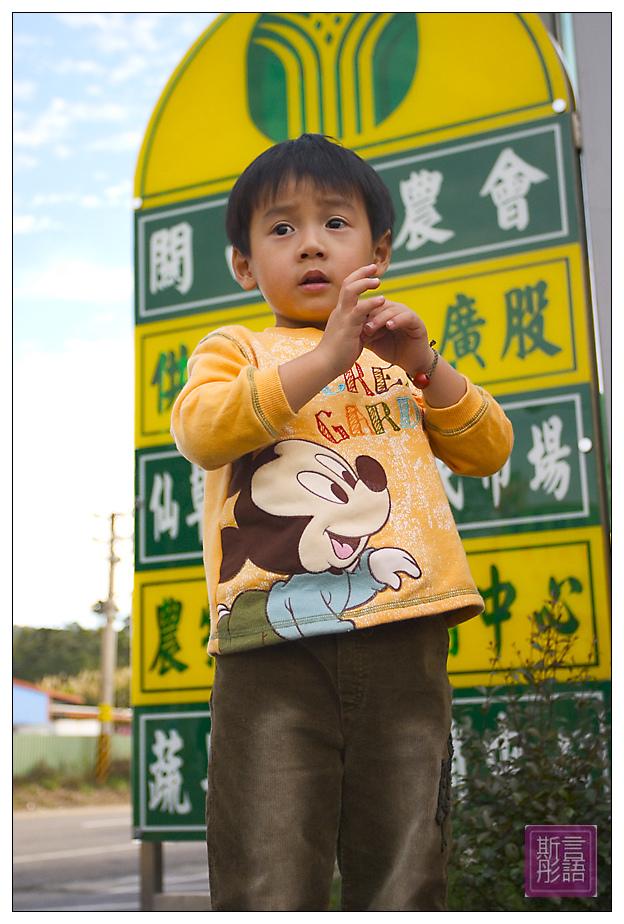 關西仙草 (1)