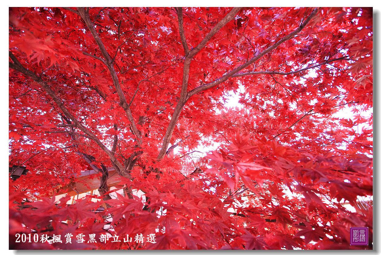 楓葉. (1)