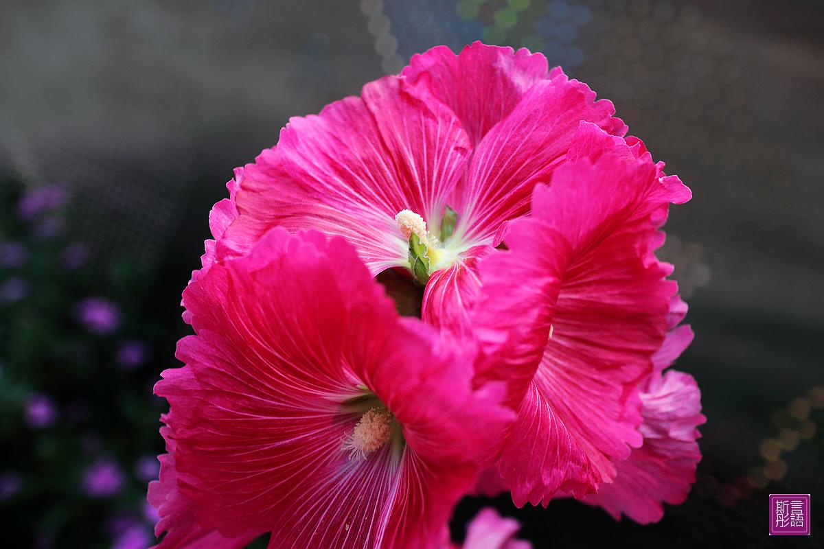 花卉 (10)