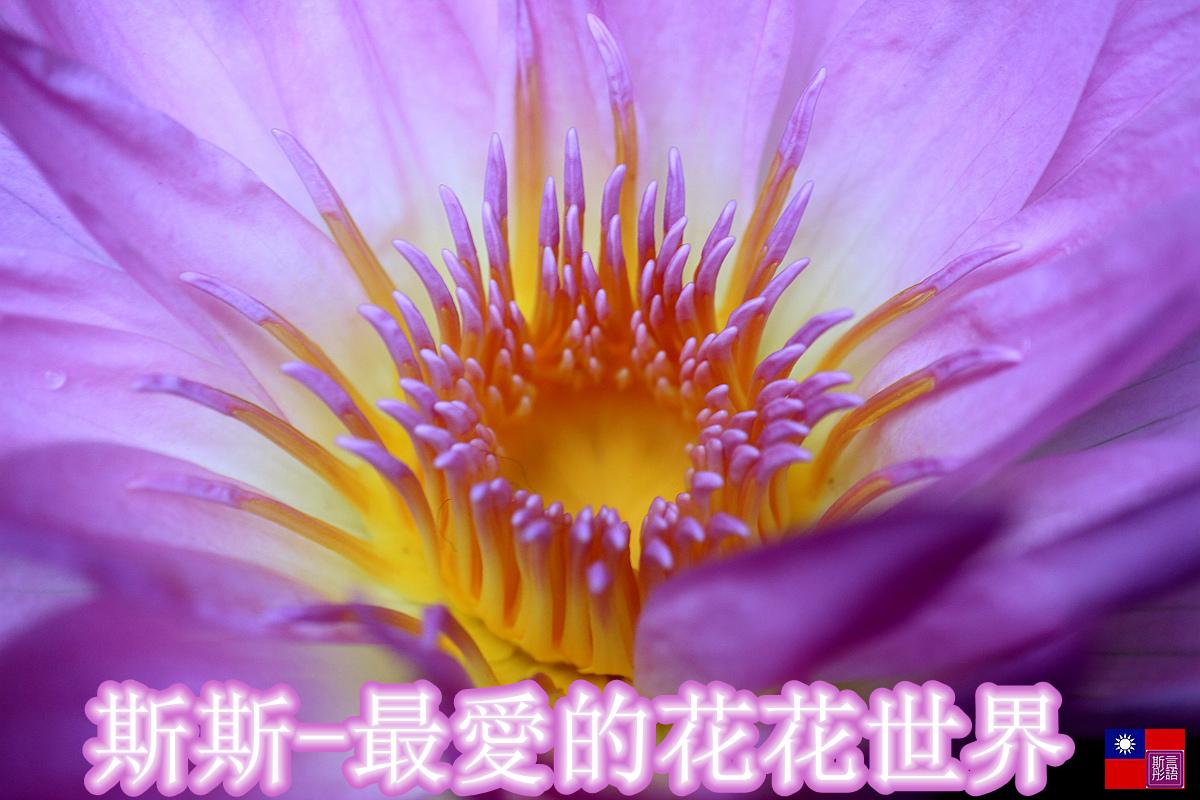 花花世界-2 (1)