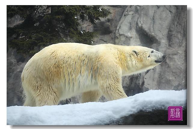 我愛北極熊(1)