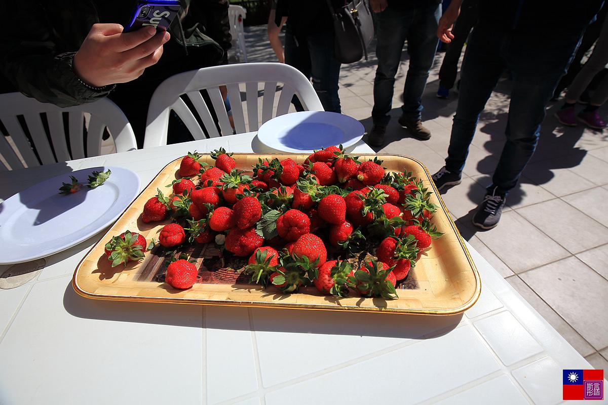 土耳其風味午餐 (40)