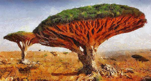 dragons-blood-tree-dracaena-cinnabari-georgi-dimitrov.jpg