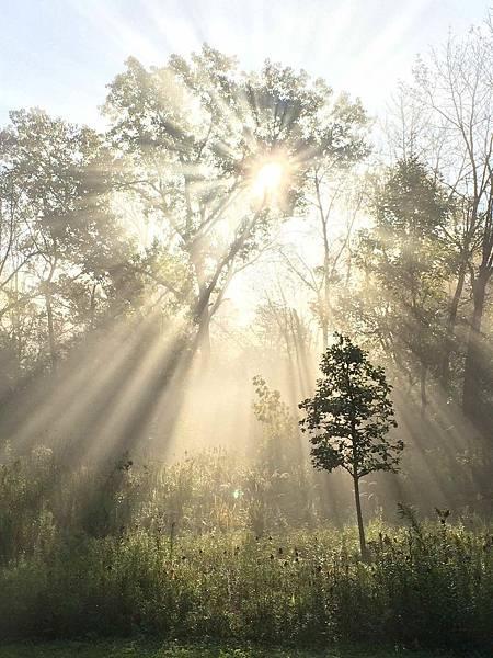 Baby+oak+and+sunrays.jpg