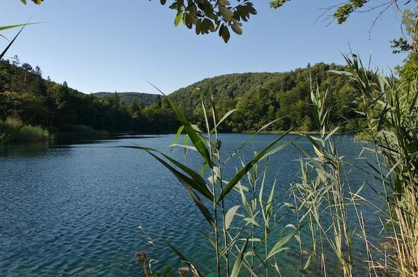 湖邊有類似蘆葦的植物
