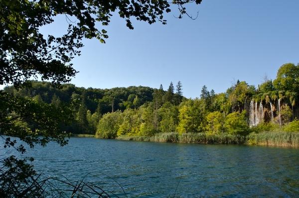 湖裡有鯉魚和鱒魚